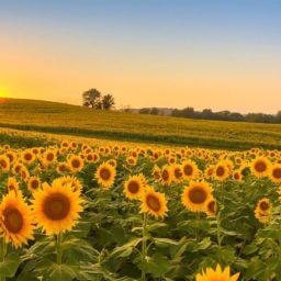 Pura Vida* – der Sonne entgegen!